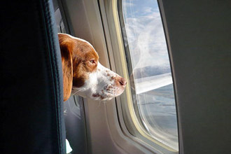 Tips for Traveling with Pets photo